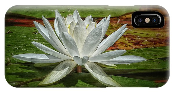 Water Lily Phone Case by Heather Kertzer