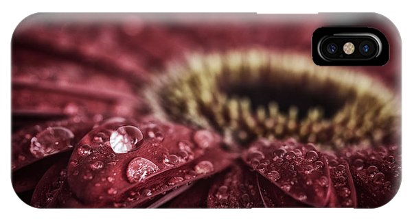 Waterdrops On A Gerbera Daisy IPhone Case