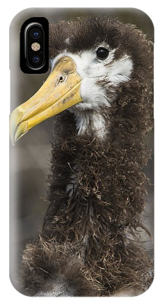 Albatross iPhone Case - Waved Albatross Molting Juvenile by Pete Oxford