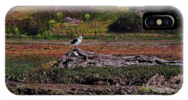 Western Gulls Nesting In A Log IPhone Case