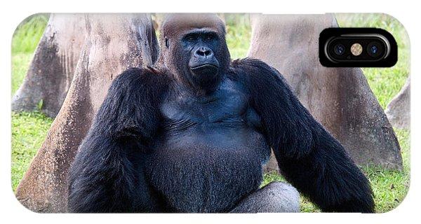 Western Lowland Gorilla IPhone Case