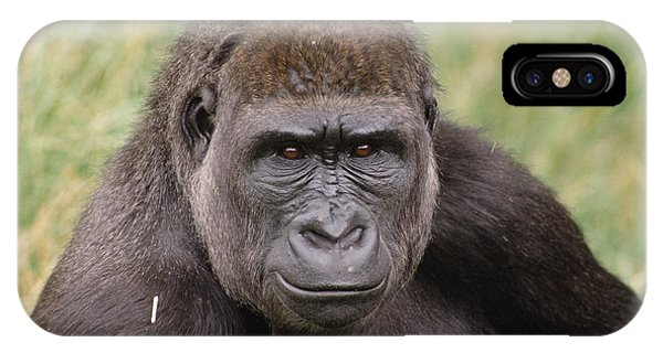 Western Lowland Gorilla Young Male IPhone Case
