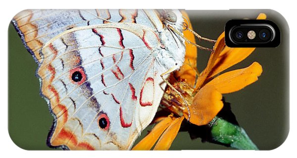 Pterygota iPhone Case - White Peacock Butterfly by Millard H. Sharp