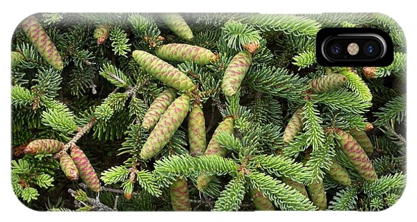 Spruce iPhone Case - White Spruce (picea Glauca) by Bob Gibbons/science Photo Library