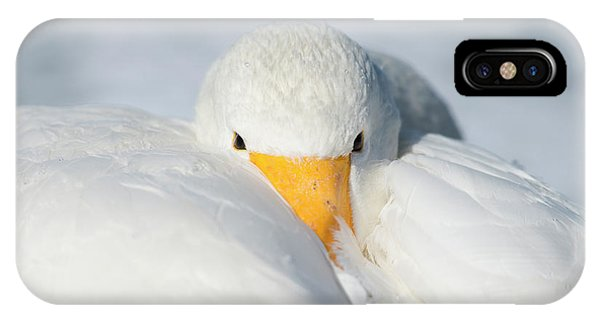 Behaviour iPhone Case - Whooper Swan Resting by Dr P. Marazzi