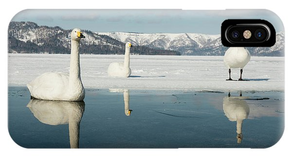 Behaviour iPhone Case - Whooper Swans by Dr P. Marazzi