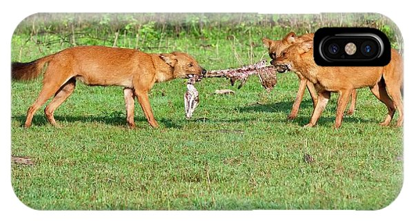 Carcass iPhone Case - Wild Dogs Playing With A Carcass by K Jayaram