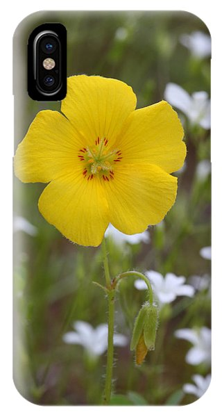 Wood Sorrel And Sandwort IPhone Case