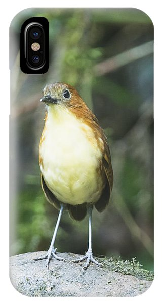 Yellow-breasted Antpitta IPhone Case