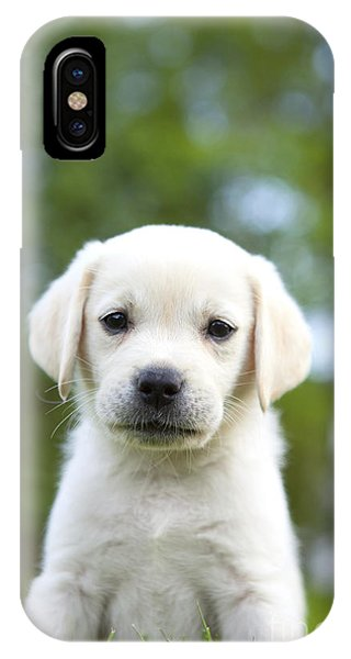 Yellow Lab iPhone Case - Yellow Lab Puppy by Diane Diederich