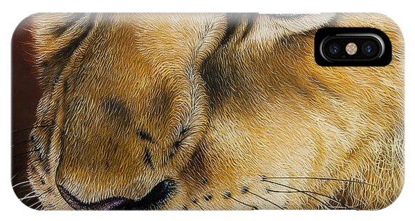 African Lion Art iPhone Case - Young Lion by Jurek Zamoyski