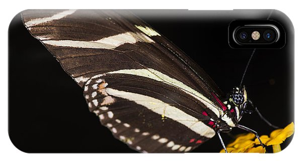 Zebra Longwing IPhone Case