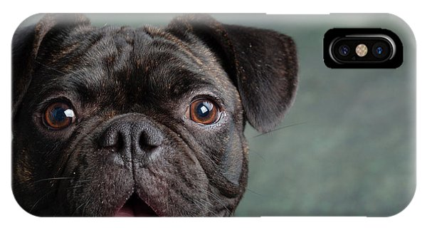 Pug iPhone Case - Portrait Of Pug Bulldog Mix Dog by Animal Images