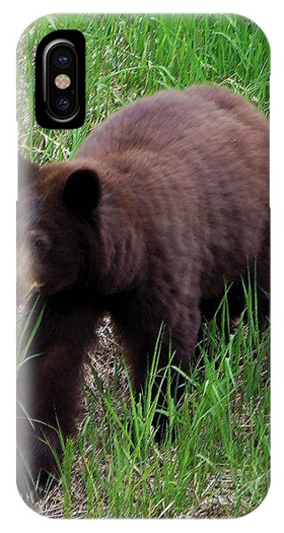 100414 Black Bear IPhone Case