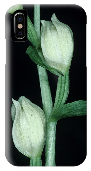 Orchid Flowers Phone Case by Paul Harcourt Davies/science Photo Library
