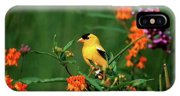 Finch iPhone Case - American Goldfinch (carduelis Tristis by Richard and Susan Day