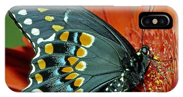 Pterygota iPhone Case - Eastern Black Swallowtail by Millard H. Sharp