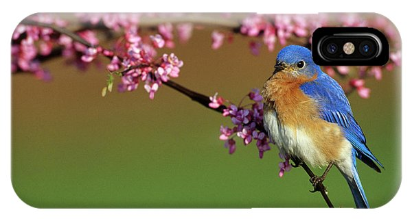 Avian iPhone Case - Eastern Bluebird (sialia Sialis by Richard and Susan Day