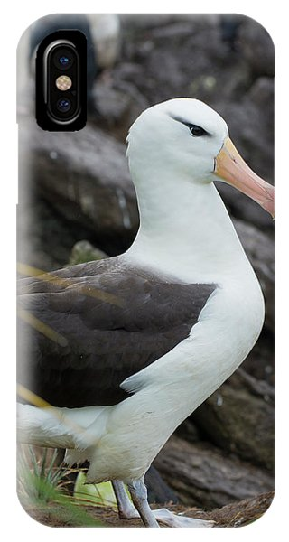 Albatross iPhone Case - Falkland Islands by Inger Hogstrom