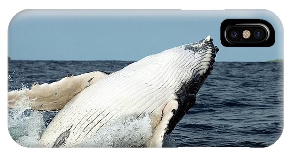 Humpback Whale Phone Case by Christopher Swann/science Photo Library
