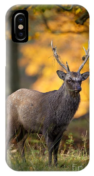 110307p073 IPhone Case