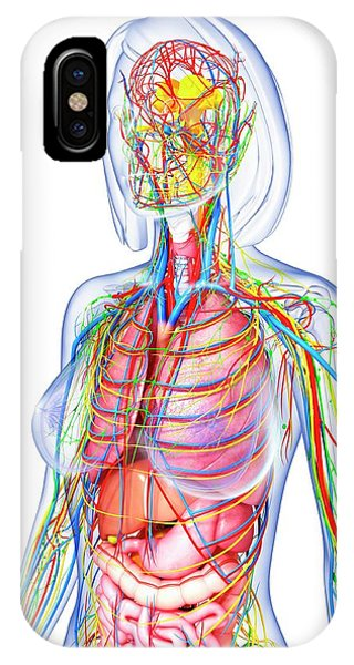 Internal Jugular Vein Iphone Cases Fine Art America