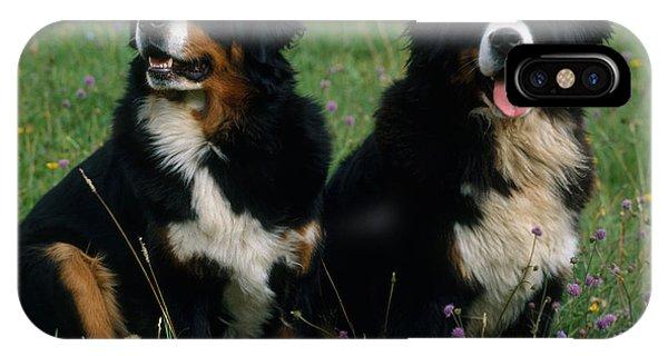 Bernese Mountain Dog iPhone Case - Bernese Mountain Dog by Hans Reinhard