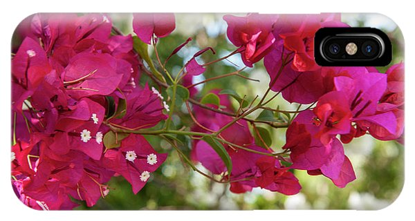 Bougainvillea iPhone Case - British West Indies, Cayman Islands by Lisa S. Engelbrecht