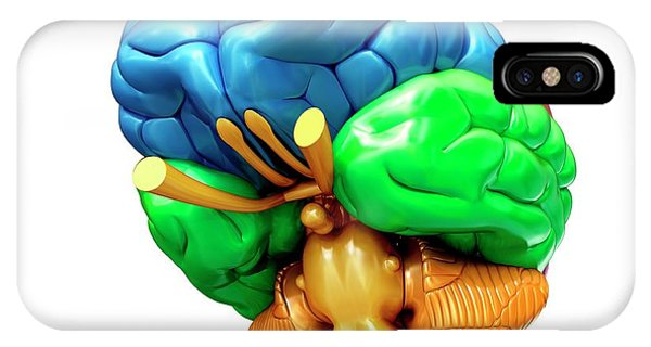 Human Brain Regions Phone Case by Pixologicstudio/science Photo Library