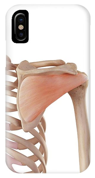 Human Shoulder Muscles Phone Case by Sebastian Kaulitzki/science Photo Library