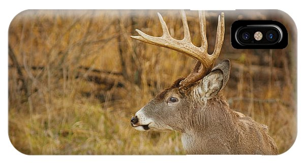 12 Point White-tail IPhone Case