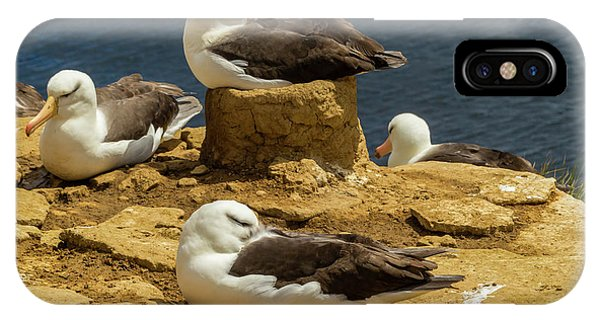 Albatross iPhone Case - South America, Falkland Islands by Jaynes Gallery
