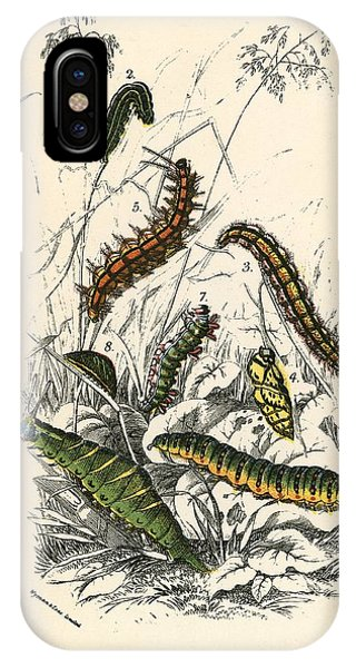 Insect iPhone Case - Butterflies by English School