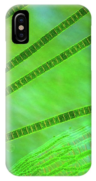 Desmids On Sphagnum Moss IPhone Case
