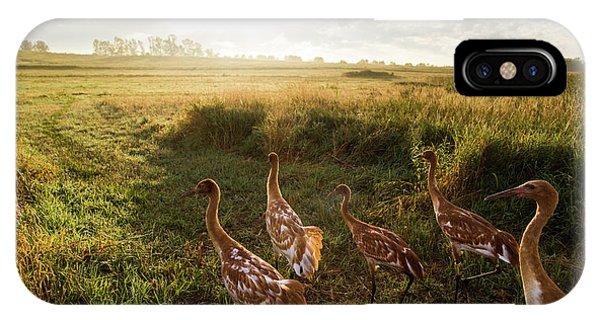 Horicon Marsh iPhone Case - Whooping Crane Reintroduction, Direct by Tom Lynn