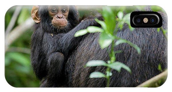 Africa, Uganda, Kibale National Park IPhone Case