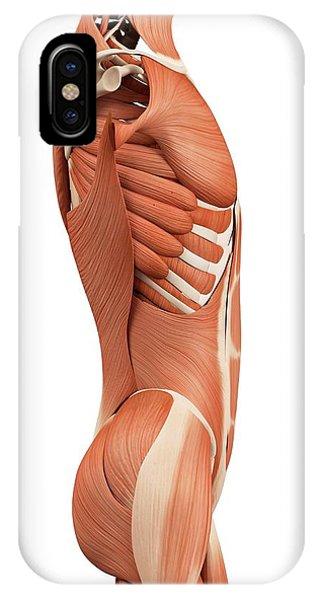 Human Abdominal Muscles Phone Case by Sebastian Kaulitzki