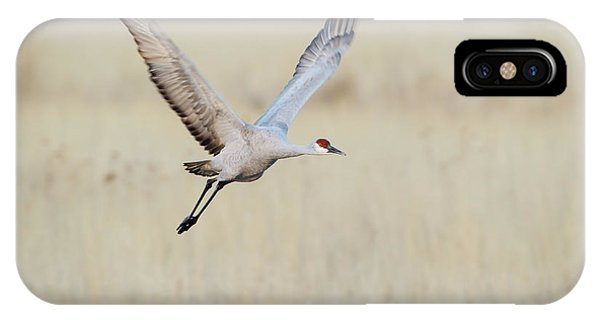 Migratory Birds iPhone Case - Sandhill Crane (grus Canadensis by Larry Ditto