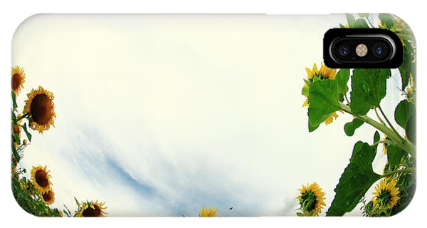 Sunflowers Phone Case by Falko Follert