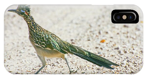 Greater Roadrunner iPhone Case - Usa, New Mexico, Bosque Del Apache by Jaynes Gallery