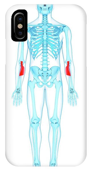 Arm Muscles Phone Case by Sebastian Kaulitzki/science Photo Library