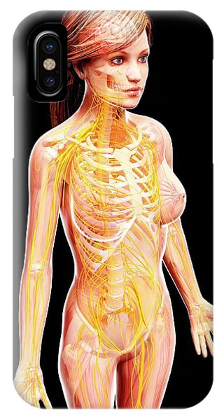 Female Nervous System Phone Case by Pixologicstudio/science Photo Library