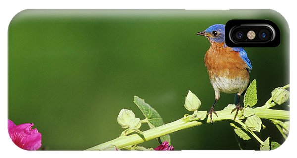 Eastern Bluebird (sialia Sialis Phone Case by Richard and Susan Day