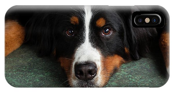 Bernese Mountain Dog iPhone Case - Portrait Of Bernese Mountain Dog by Animal Images