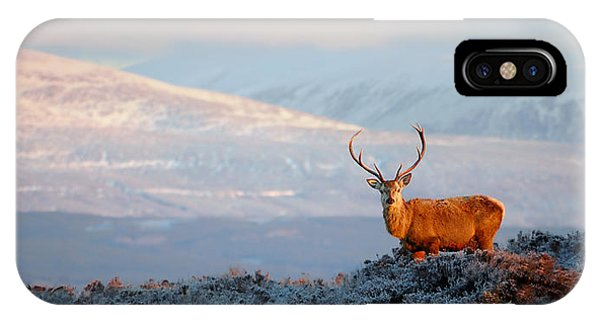 IPhone Case featuring the photograph Red Deer Stag by Gavin Macrae