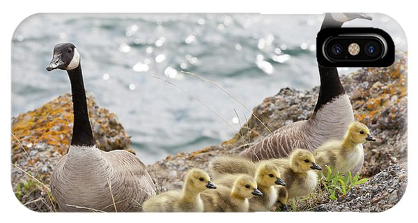 Goslings iPhone Case - Usa, Washington, San Juan Islands by Jaynes Gallery