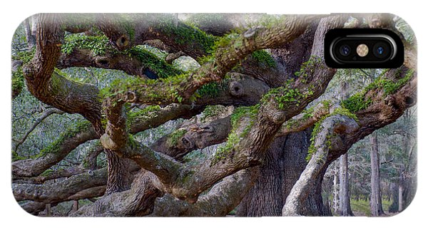 Angel Oak Tree Unique View IPhone Case