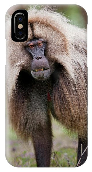 East Africa iPhone Case - Gelada, Gelada Baboon (theropithecus by Martin Zwick