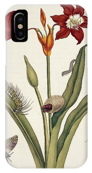 Insects Of Surinam Phone Case by Natural History Museum, London/science Photo Library