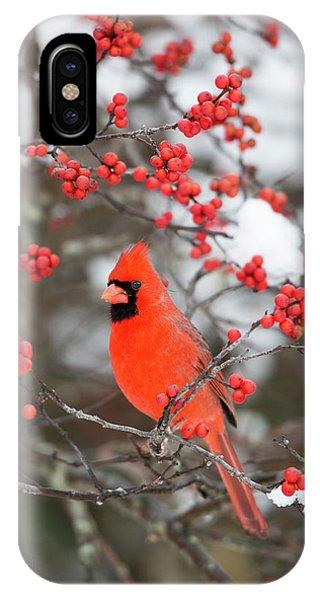 Northern Cardinal (cardinalis Cardinalis IPhone Case
